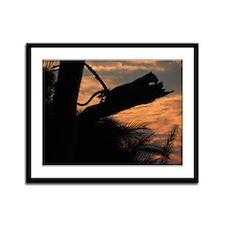 Leopard Resting at Sunset Framed Panel Print