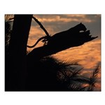 Leopard Resting at Sunset Small Poster