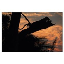 Leopard Resting at Sunset Large Poster