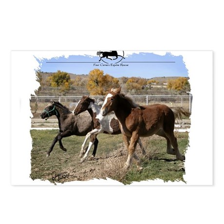 Three Foals Postcards (Package of 8)