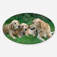 Golden Retrievers Sticker (Oval)