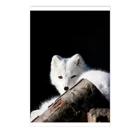 Arctic Fox Postcards (Package of 8)