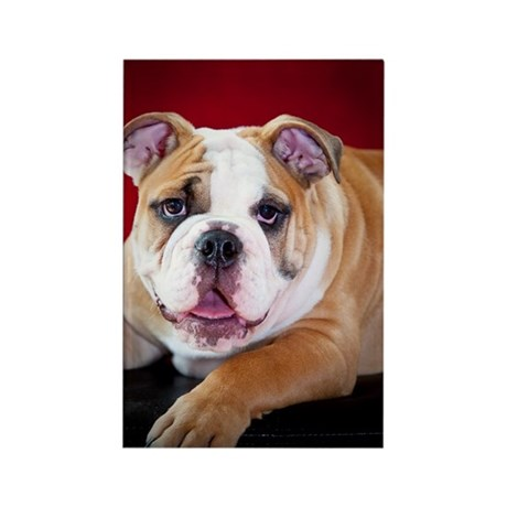 English Bulldog Puppy Rectangle Magnet (100 pack)