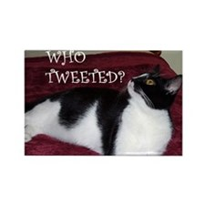 Kitty Who Tweeted Rectangle Magnet (10 pack)