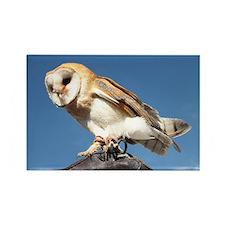 European Barn Owl Rectangle Magnet