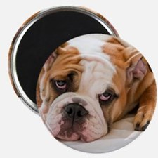 "English Bulldog Puppy 2.25"" Magnet (100 pack)"