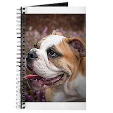 English Bulldog Puppy Journal