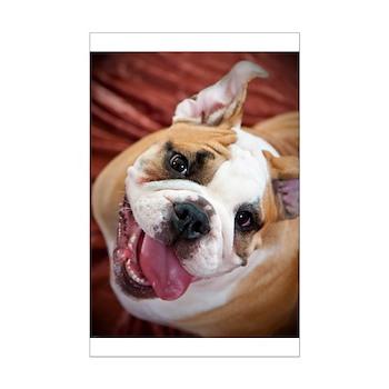 English Bulldog Puppy Mini Poster Print