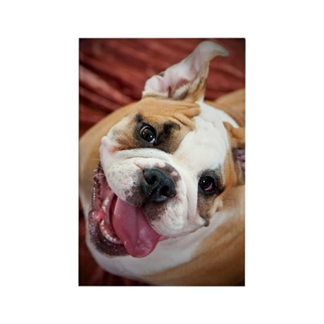 English Bulldog Puppy Rectangle Magnet (10 pack)