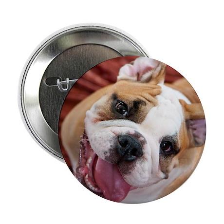 "English Bulldog Puppy 2.25"" Button (100 pack)"