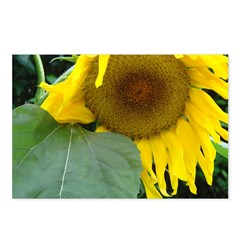 Sunflower Beauty Postcards (Package of 8)