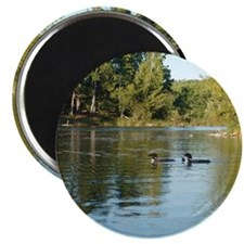Loons Magnet