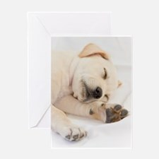 Labrador Puppy Greeting Card