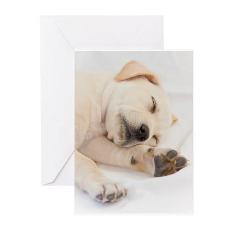 Labrador Puppy Greeting Cards (Pk of 10)