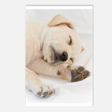 Labrador Puppy Postcards (Package of 8)