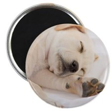 "Labrador Puppy 2.25"" Magnet (100 pack)"