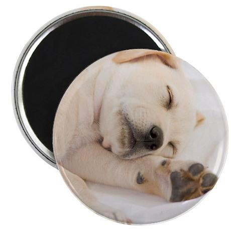 "Labrador Puppy 2.25"" Magnet (10 pack)"