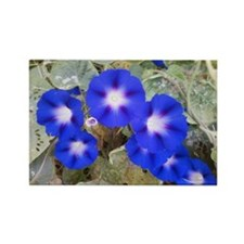 Pennsylvania Dutch Flowers Rectangle Magnet
