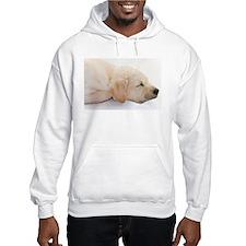 Labrador Puppy Dog Hoodie