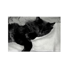 Lazy Day Rectangle Magnet (10 pack)