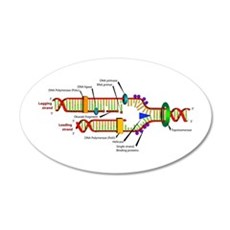 DNA Synthesis 20x12 Oval Wall Peel