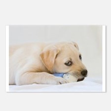 Labrador Puppy Dog Postcards (Package of 8)