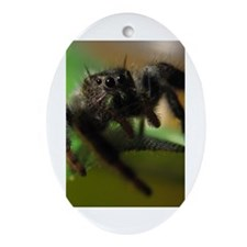 Jumping Spider Ornament (Oval)