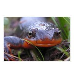 Salamander Newt Face Postcards (Package of 8)