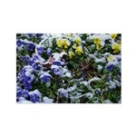 Pansies in Snow Rectangle Magnet (10 pack)