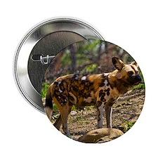 """African Wild Dog 1932 2.25"""" Button"""