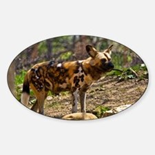 African Wild Dog 1932 Sticker (Oval)