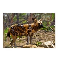 African Wild Dog 1932 Postcards (Package of 8)