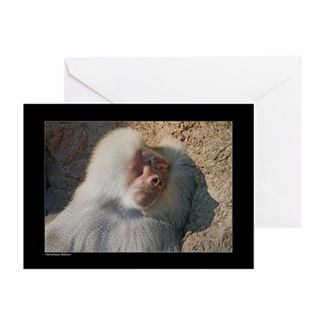 Male Baboon Greeting Cards (Pk of 10)
