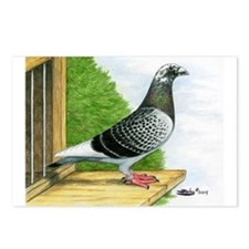 Racing Homer Pigeon Postcards (Package of 8)