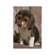 Beagle Puppy Photo Rectangle Magnet