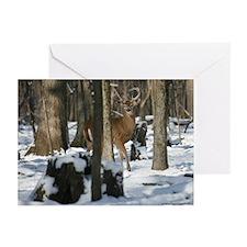 Deer 2842-016 Greeting Cards (Pk of 10)
