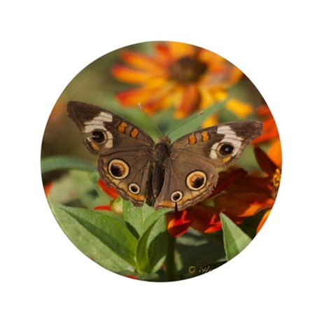 "Buckeye Butterfly Gift 3.5"" Button"