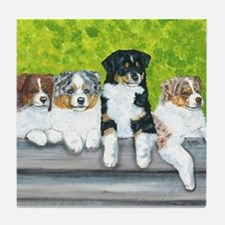 Austrailian Shepherd Puppy Li Tile Coaster