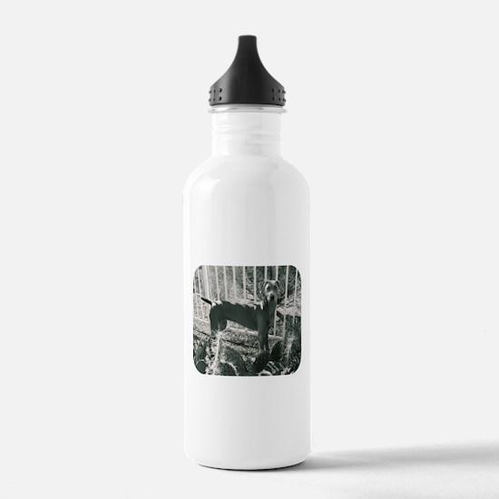 Sedona Weimaraner 9 Water Bottle