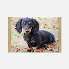 Puppy Love Doxie Rectangle Magnet