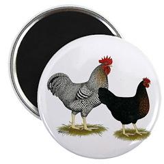 Black Sex-linked Chicken Pair Magnet