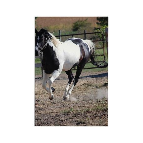 Horse/Pinto Black & White Rectangle Magnet