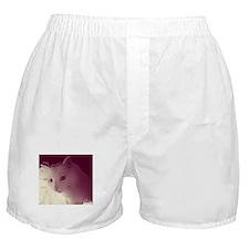 Introspective Cat Boxer Shorts