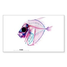Selene-b Fish Sticker (Rectangle)