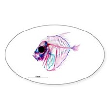 Selene-b Fish Sticker (Oval)