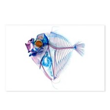 Blue Fish Postcards (Package of 8)