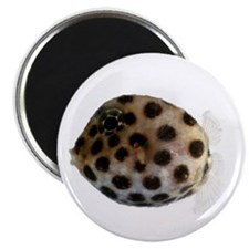 Ostraciidae Fish Magnet