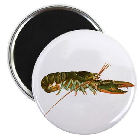 American Lobster Artwork Magnet