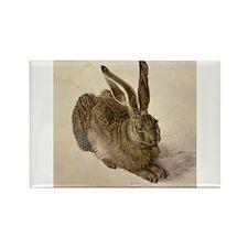 Hare by Albrecht Durer Magnets