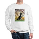 Spring & Black Lab Sweatshirt